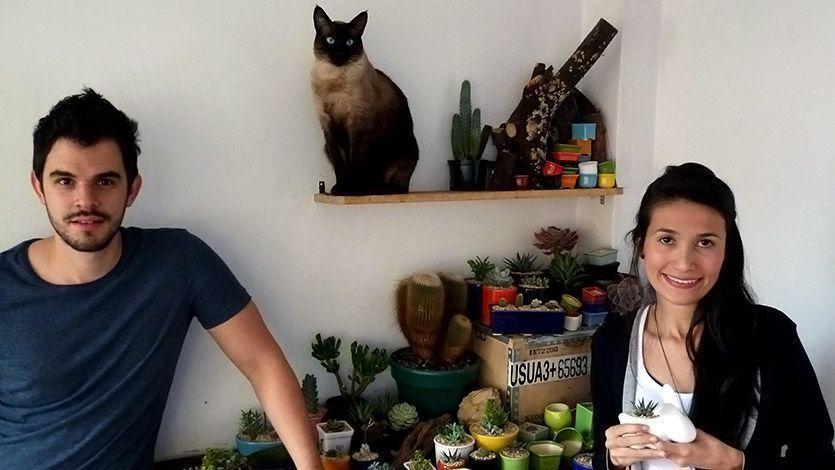 Siames garden la tienda virtual de cactus y suculentas for Suculentas santiago