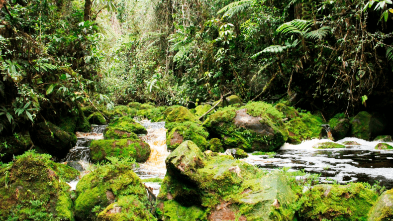 Amé: la fundación que trabaja por conservar el legendario bosque de Galilea