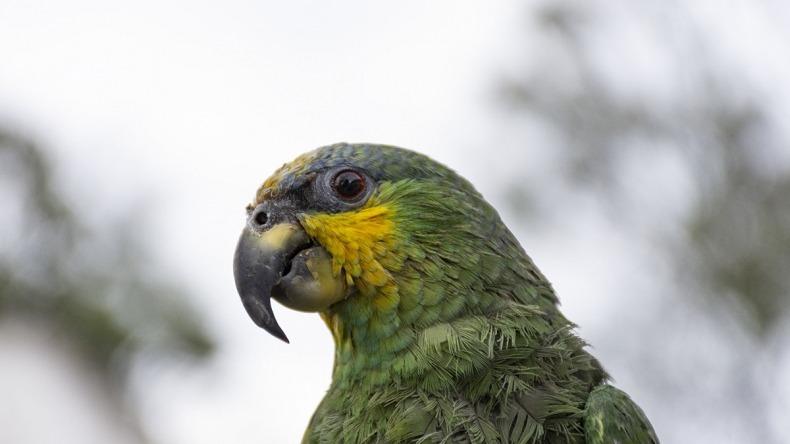 Fauna silvestre del mundo sigue amenazada por mitos y creencias
