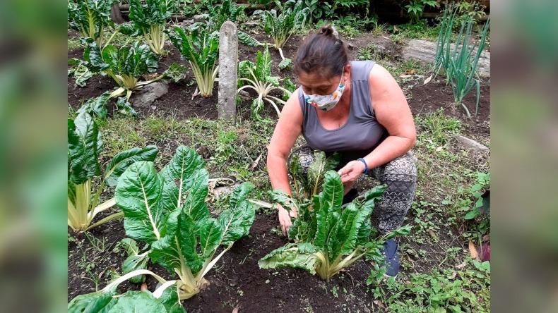 Con el programa 'Produce sano, cultiva vida' 500 familias en Ibagué tendrán sus propias huertas caseras