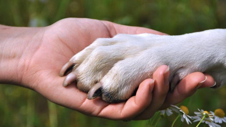 Proyecto de ley otorgaría 2 días de luto a trabajadores que pierdan sus mascotas