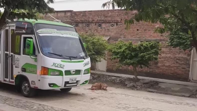 Alcalde de Venadillo pide que no dejen sin trabajo a conductor que arrolló a un perro en el municipio