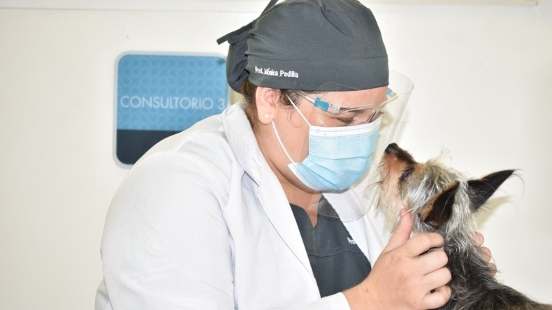 Consultorio Jurídico de la U.Cooperativa ofrecerá asesorías en temas relacionados con mascotas