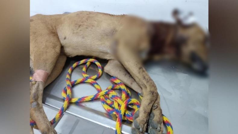 Indignación en El Espinal por asesinato de un perro con machete