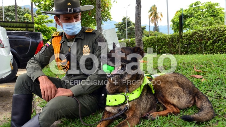Adopte a un héroe canino: 'Kimberly' experta en detección de narcóticos, busca un nuevo hogar
