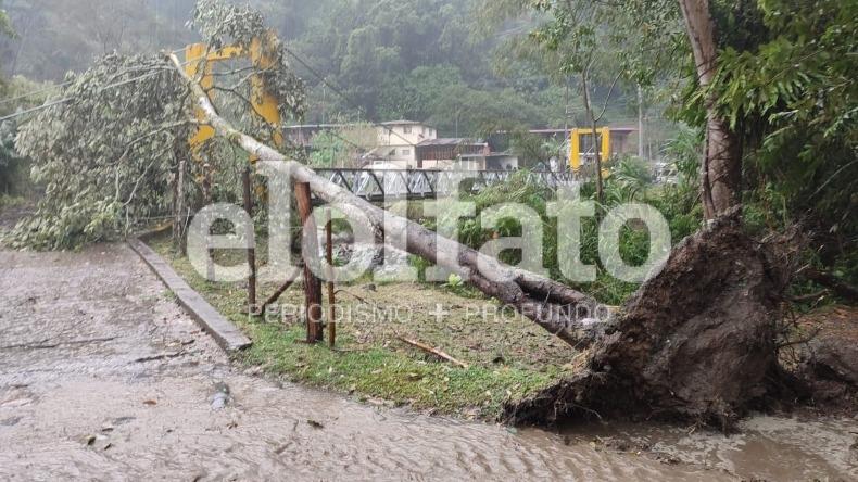 Aguacero en el Cañón del Combeima provoca caída de árboles y postes de energía