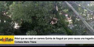 Embedded thumbnail for Árbol que cayó en plena carrera Quinta de Ibagué por poco causa una tragedia
