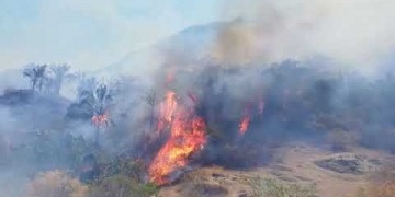 Embedded thumbnail for Más de 1.000 hectáreas de bosque han sido consumidas por incendio forestal de Honda