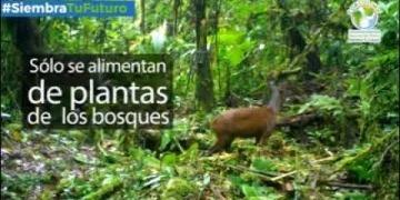 Embedded thumbnail for Aislamiento social ha beneficiado también a la fauna silvestre del Tolima