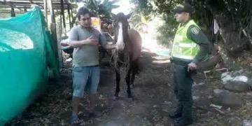 Embedded thumbnail for La historia del caballo que se desplomó en Mariquita