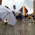 'Boquerona': la gallina que se que convirtió en la mascota del paro nacional en Ibagué