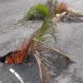 Desperdicio de agua potable en Piedra Pintada por colapso de la red de acueducto