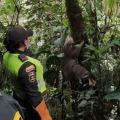 Intruso en Padua: oso perezoso fue encontrado dentro de una casa