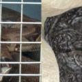 Familia fue sorprendida por la presencia de una serpiente con 45 crías en Fresno