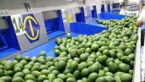 Piden habilitar corredores humanitarios para transporte de alimentos en el Tolima