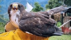 Dos niños de Chaparral rescataron a un águila cola corta
