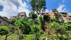 Árbol en riesgo de caída pone en peligro la vida de las familias del barrio La Pola parte baja de Ibagué