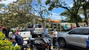 Emergencia en Mirolindo: árbol cayó sobre varios vehículos