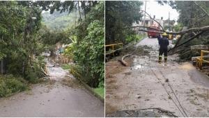 Fuertes lluvias provocaron caída de árboles en dos sectores de Ibagué