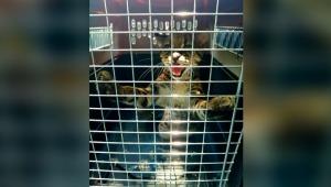 Conmovedor: fueron devueltos a su hábitat natural tres especies de animales en el Tolima