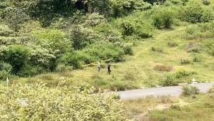 Denuncian tala de árboles para continuar construyendo viviendas en invasión de la comuna Ocho