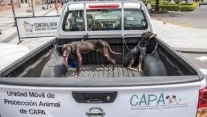 Más de 1.800 llamadas se han registrado por maltrato y abandono animal en Ibagué