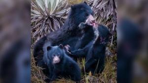El emocionante relato detrás de 'Un beso a mamá': una fotografía captada por un ibaguereño