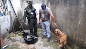 Mascota duró 15 días encerrada y abandonada en una casa del barrio Los Ciruelos de Ibagué