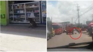 Presunto caso de abandono animal fue captado en video por ciudadanos en El Salado de Ibagué