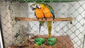 Más de 150 aves se están recuperando en el CAV de Cortolima