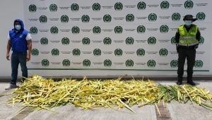 Incautaron más de 100 kilogramos de palma real y murrapo durante la celebración del domingo de ramos en Ibagué