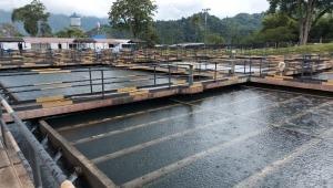IBAL restablece captación de agua en la bocatoma Combeima