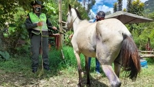 Policía rescató a una yegua que llevaba más de ocho días en estado de abandono