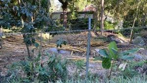 Denuncian tala indiscriminada de guaduas en el sector de El Vergel