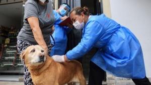 Inicia la segunda semana de vacunación contra la rabia para mascotas de Ibagué