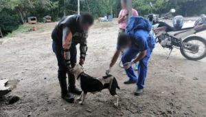 Fiscalía imputó a un hombre por mantener en pésimas condiciones de cuidado a cuatro perros